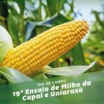 UNIARAXÁ E CAPAL realizam 19º Ensaio de Milho