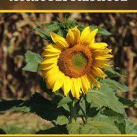 Sustentabilidade e Agricultura hoje